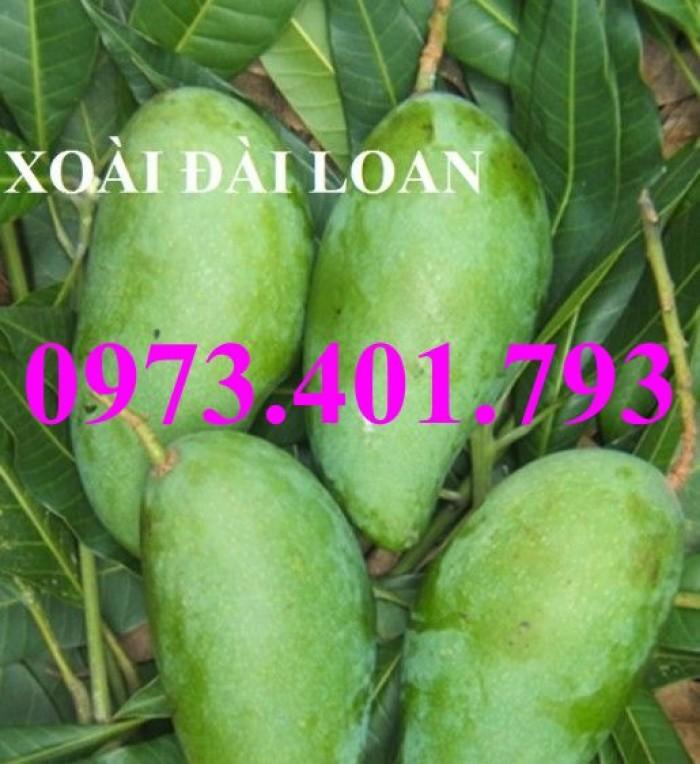Giống cây xoài Đài Loan, cây xoài , kĩ thuật trồng xoài, cây xoài Đài Loan, xoài10