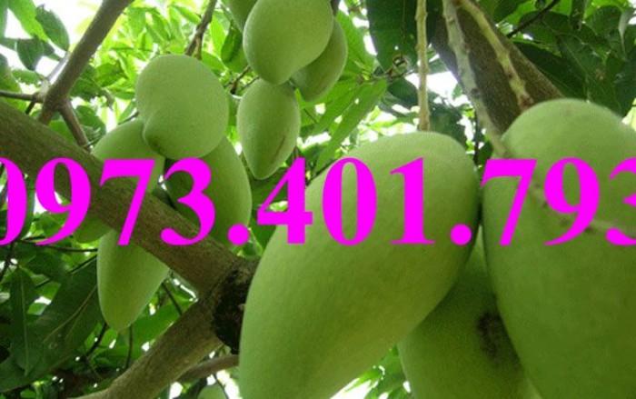 Giống cây xoài thái, xoài thái, cây xoài thái, xoài, cây xoài, kĩ thuật trồng xoài thái, thông tin xoài thái10
