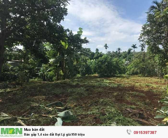 Bán gấp 1,4 sào đất Đạt Lý giá 950 triệu