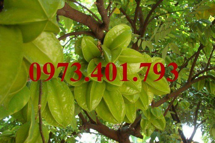 Giống cây khế ngọt, khế ngọt, cây khế ngọt, kĩ thuật trồng cây khế ngọt4