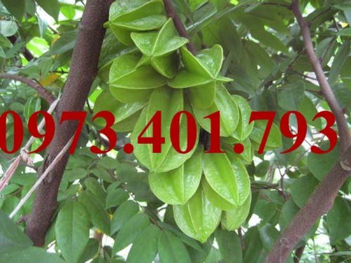 Giống cây khế ngọt, khế ngọt, cây khế ngọt, kĩ thuật trồng cây khế ngọt11