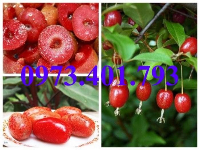 Giống cây nhót ngọt, nhót ngọt, cây nhót ngọt, cây nhót, kĩ thuật trồng cây nhót ngọt7