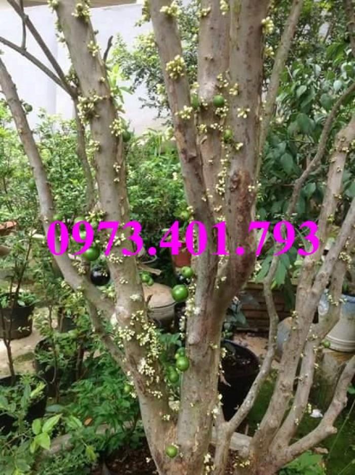Giống cây thăng long ruột đỏ, thăng long ruột đỏ, cây thăng long ruột đỏ, cây thăng long, kĩ thuật trồng cây11