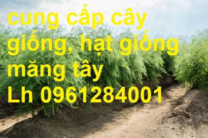 Cung cấp cây giống, hạt giống măng tây xanh, viencaygiongtrunguong11