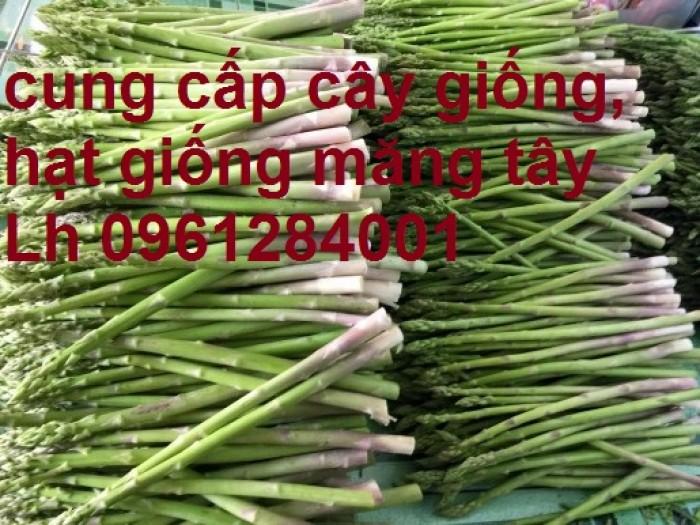 Cung cấp cây giống, hạt giống măng tây xanh, viencaygiongtrunguong2