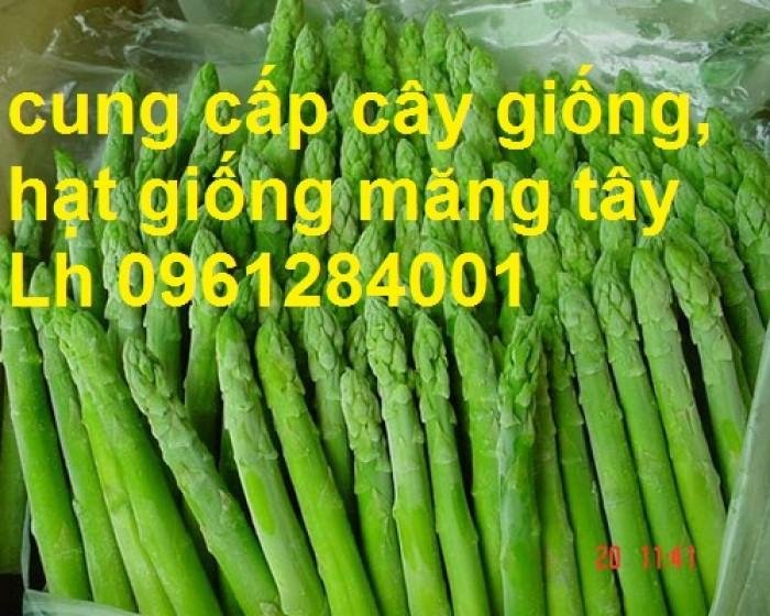 Cung cấp cây giống, hạt giống măng tây xanh, viencaygiongtrunguong6
