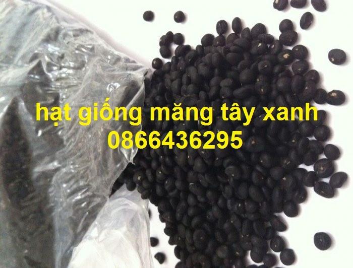 Cung cấp cây giống, hạt giống măng tây xanh, viencaygiongtrunguong4