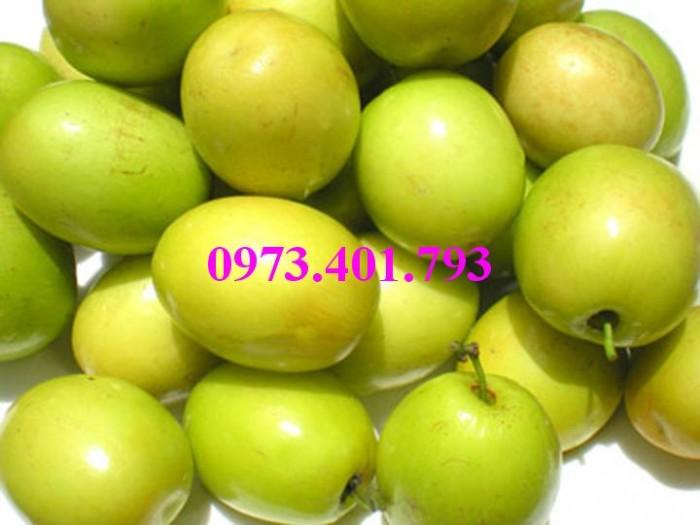 Giống cây Táo Đào Vàng, Táo Đào Vàng, cây Táo Đào Vàng, cây táo, kĩ thuật trồng táo đào vàng9