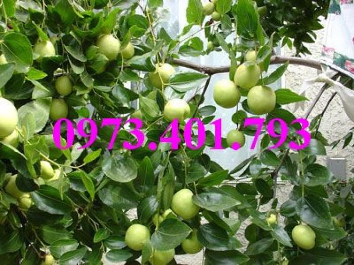 Các loại cây giống táo chất lượng10