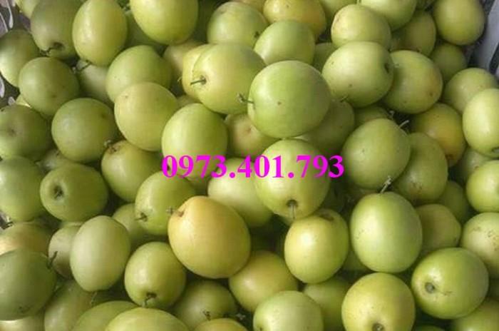 Các loại cây giống táo chất lượng11