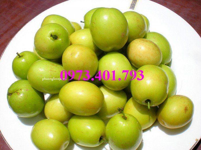 Các loại cây giống táo chất lượng12