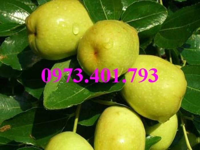 Các loại cây giống táo chất lượng13