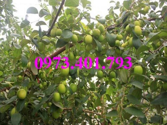 Các loại cây giống táo chất lượng14