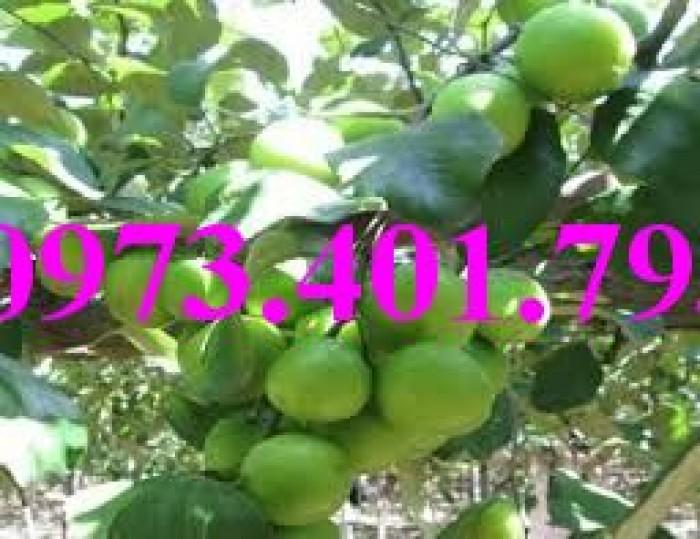 Các loại cây giống táo chất lượng21