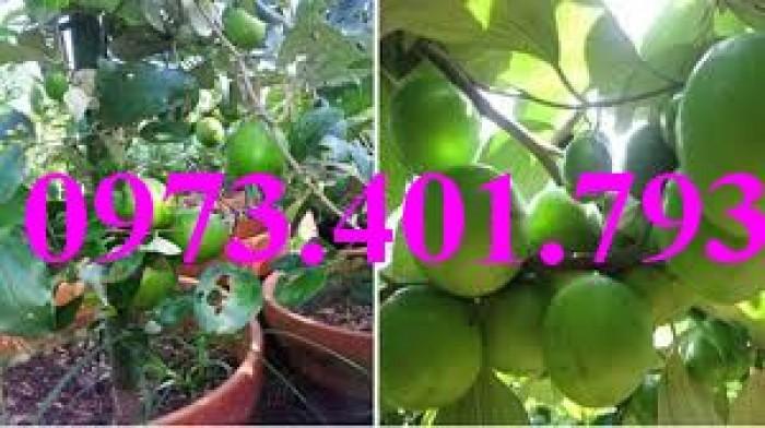 Các loại cây giống táo chất lượng23