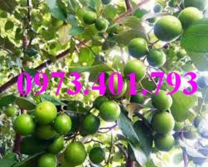 Các loại cây giống táo chất lượng25
