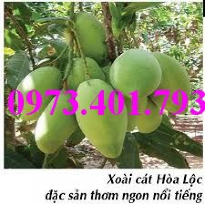 Các loại cây giống xoài8
