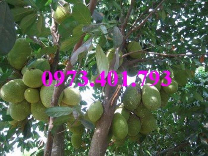 Các loại cây giống xoài7