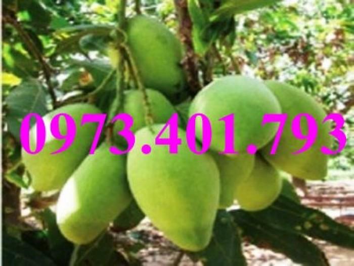 Các loại cây giống xoài12