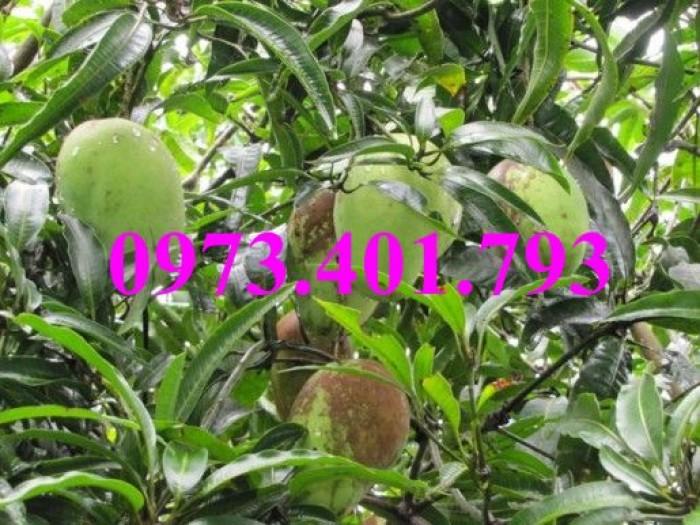 Các loại cây giống xoài14