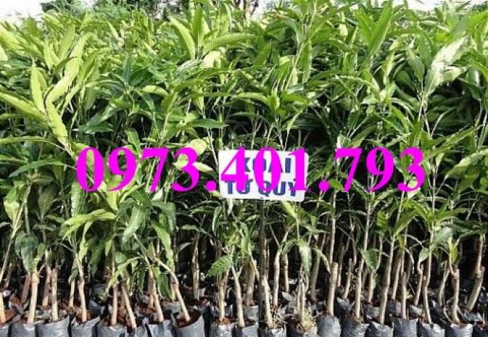Các loại cây giống xoài16