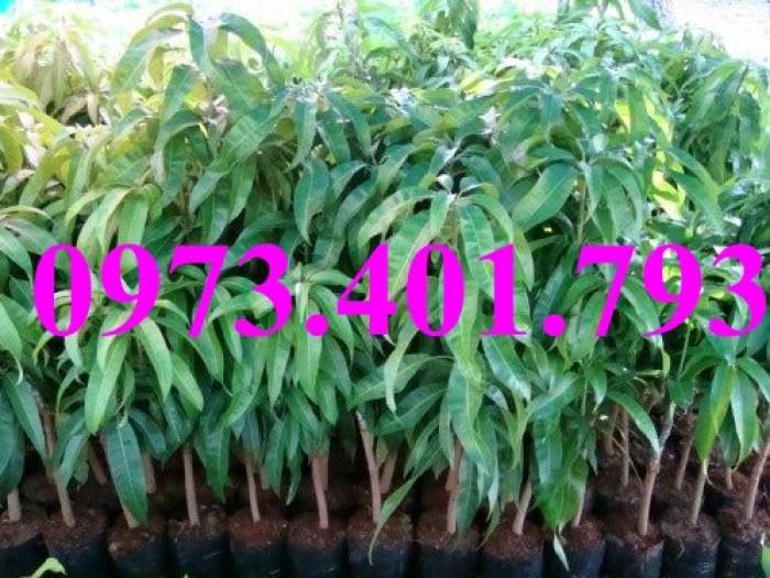 Các loại cây giống xoài22