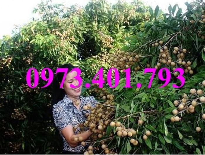 Chuyên Cung cấp các loại  giống cây nhãn uy tín, chất lượng18