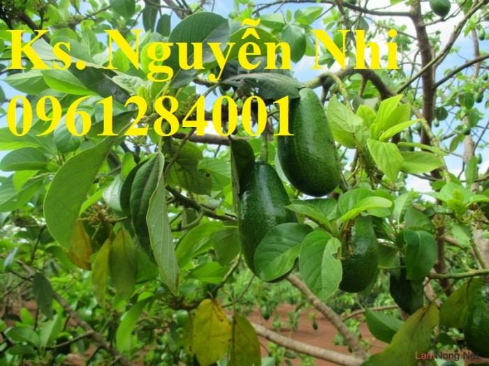 Cung cấp các loại giống cây ăn quả, giống cây bơ sáp số lượng lớn8