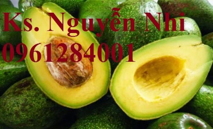 Cung cấp các loại giống cây ăn quả, giống cây bơ sáp số lượng lớn11