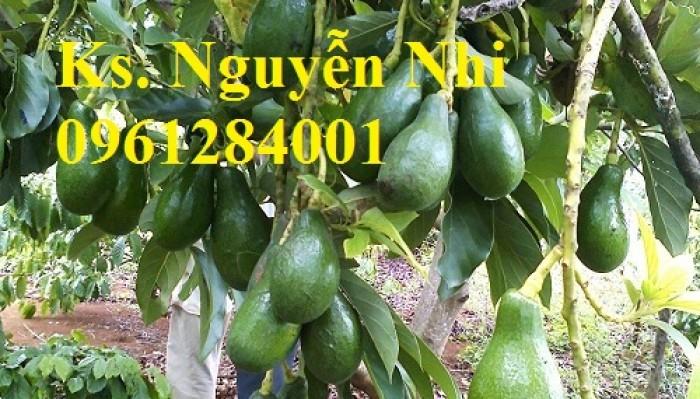 Cung cấp các loại giống cây ăn quả, giống cây bơ sáp số lượng lớn12