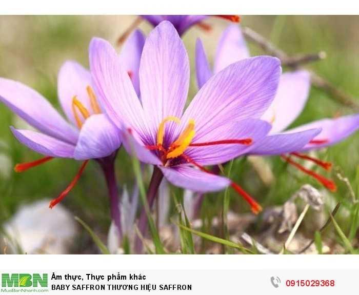 Baby Saffron Nhụy hoa nghệ tây set 2gr3