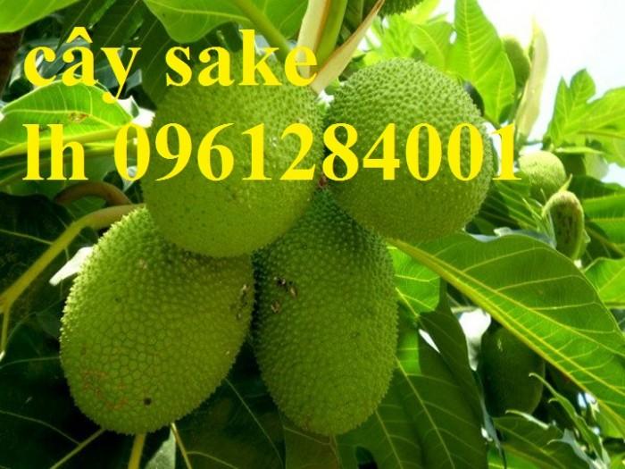 Cây sake địa chỉ mua hàng uy tín chất lượng7
