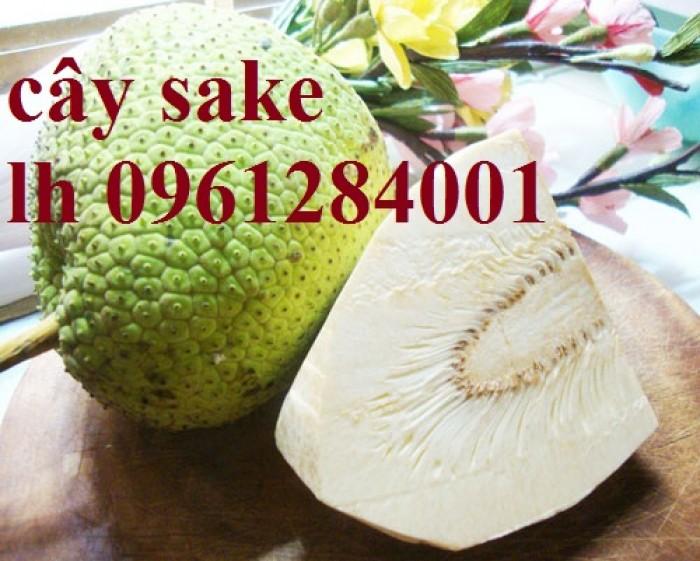 Cây sake địa chỉ mua hàng uy tín chất lượng10