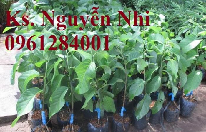 Cung cấp các loại giống cây na cho nhà vườn6