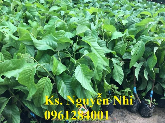 Cung cấp các loại giống cây na cho nhà vườn10
