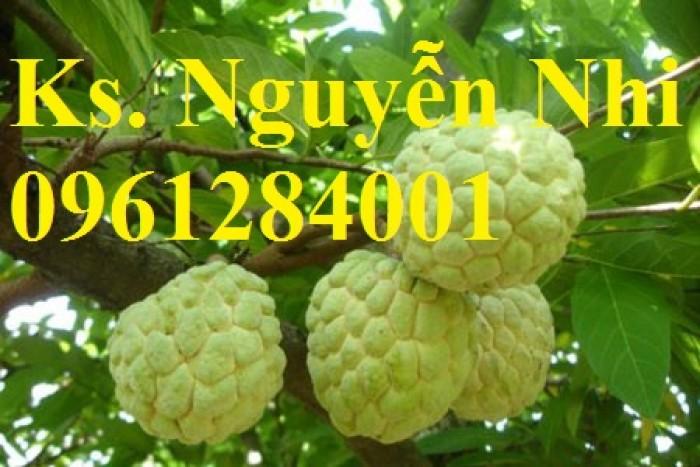 Bán cây giống na Thái Lan, mãng cầu thái số lượng lớn, giao cây toàn quốc7