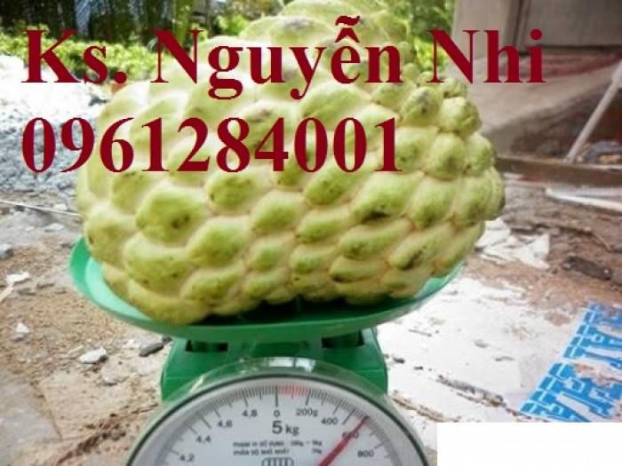 Bán cây giống na Thái Lan, mãng cầu thái số lượng lớn, giao cây toàn quốc12
