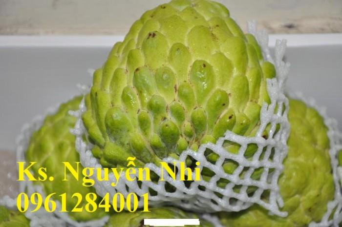 Bán cây giống na Thái Lan, mãng cầu thái số lượng lớn, giao cây toàn quốc14