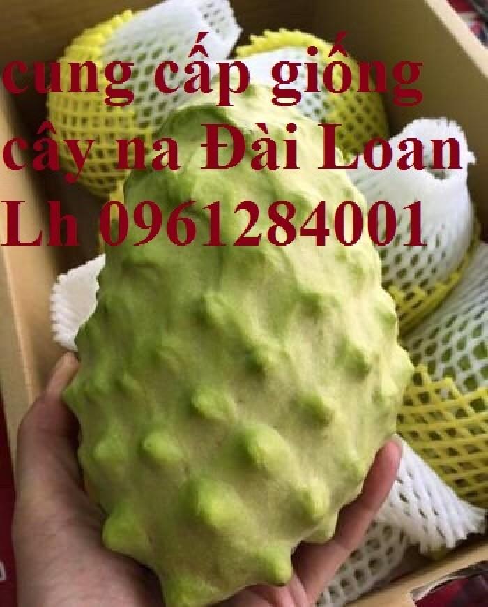Mua cây giống na Đài Loan ở đâu chuẩn giống, uy tín?8