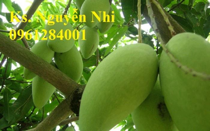 Chuyên cung cấp các loại cây ăn quả,giống xoài thái chất lượng cao7