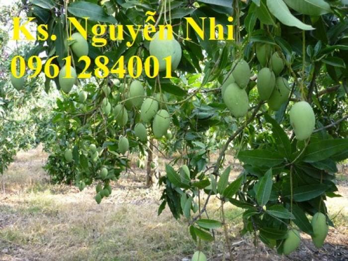 Chuyên cung cấp các loại cây ăn quả,giống xoài thái chất lượng cao8