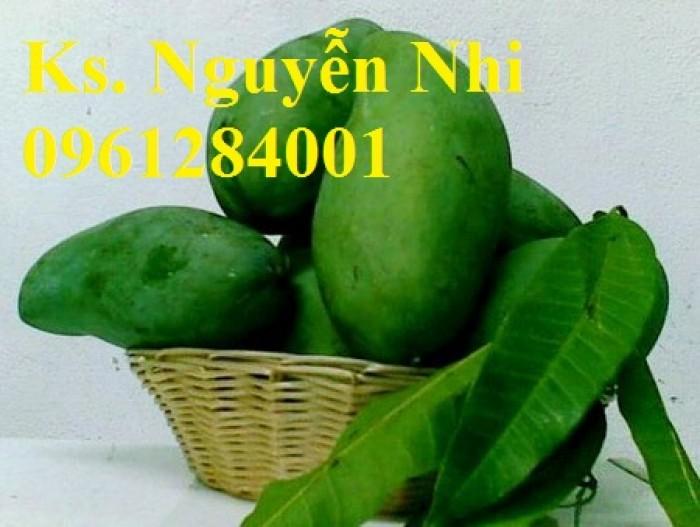 Chuyên cung cấp các loại cây ăn quả,giống xoài thái chất lượng cao9