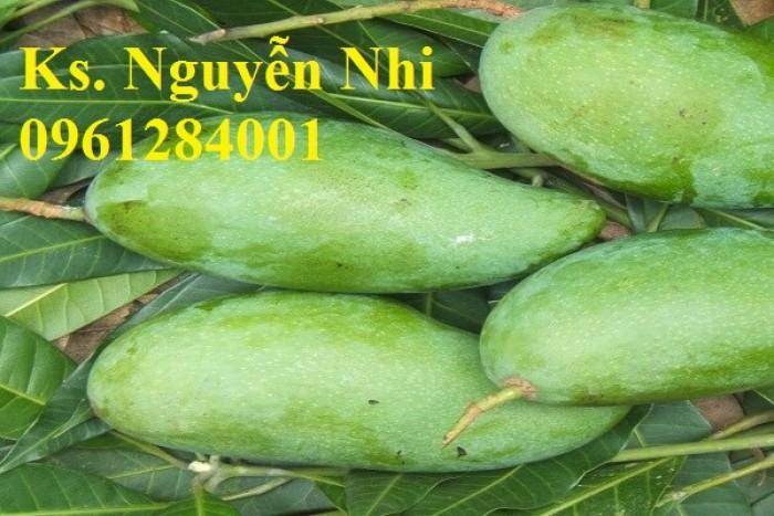 Chuyên cung cấp các loại cây ăn quả,giống xoài thái chất lượng cao10