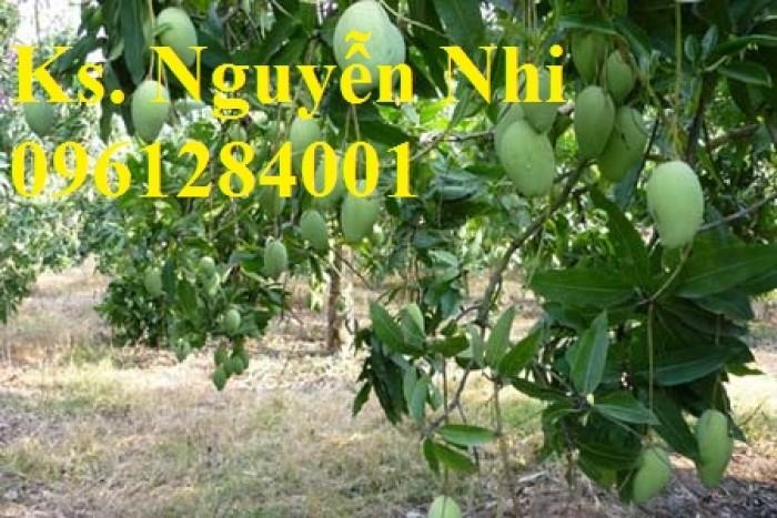 Chuyên cung cấp các loại cây ăn quả,giống xoài thái chất lượng cao11