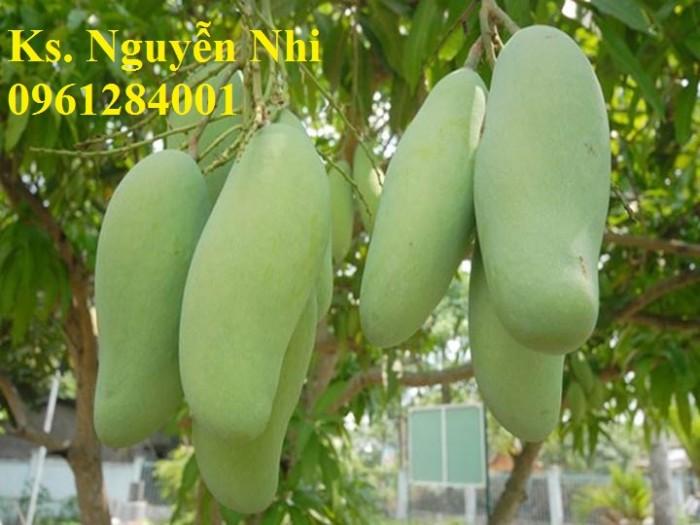 Chuyên cung cấp các loại cây ăn quả,giống xoài thái chất lượng cao12