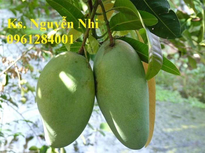 Chuyên cung cấp các loại cây ăn quả,giống xoài thái chất lượng cao13