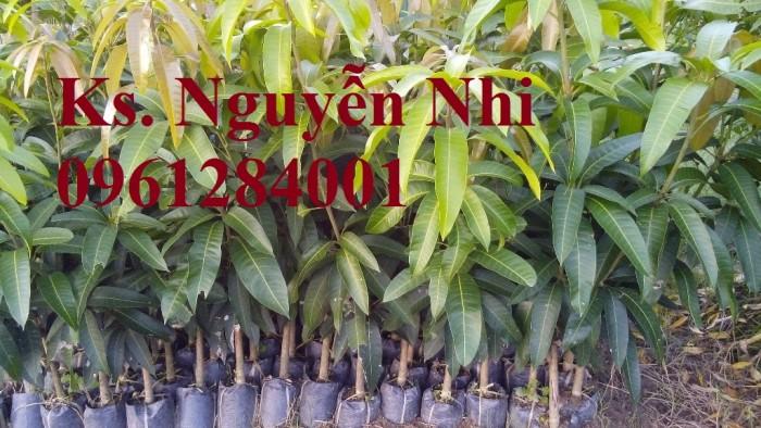 Chuyên cung cấp các loại cây ăn quả,giống xoài thái chất lượng cao14