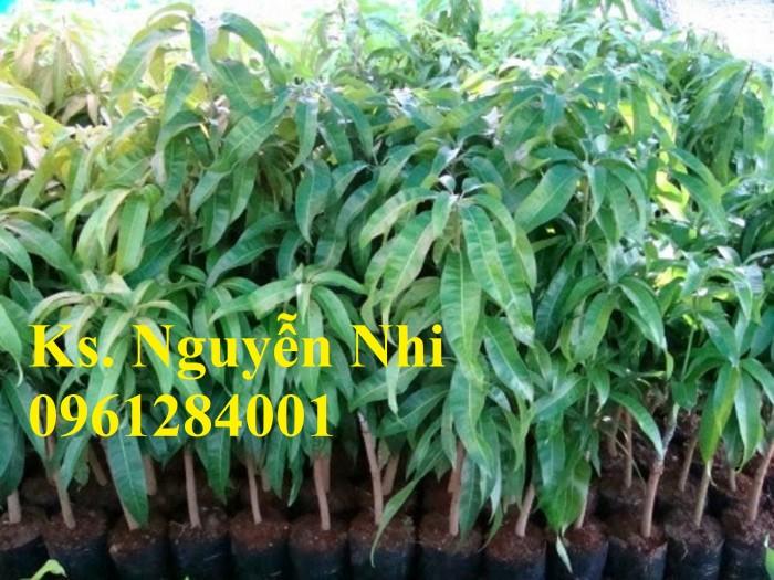 Chuyên cung cấp các loại cây ăn quả,giống xoài thái chất lượng cao15