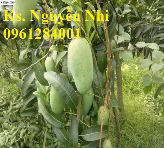 Chuyên cung cấp các loại cây ăn quả,giống xoài thái chất lượng cao16