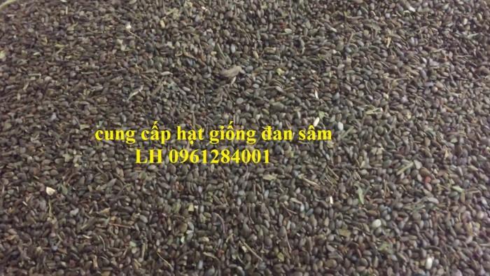 Cung cấp hạt giống đan sâm, hạt giống dược liệu, loại 1 cam kết chất lượng8
